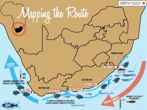 Sardine Run South Africa, Great Migration, Sardine Run South Africa Map, Sardine Run Migration Dates, Sardine Run Migration, Ocean Safari